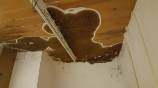 Dry Rot in Nottingham