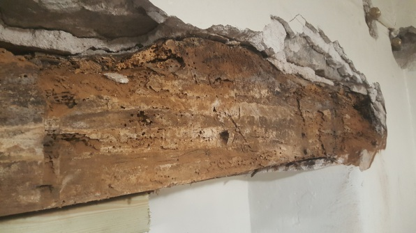 Deathwatch Beetle - Woodworm Infestation in Derbyshire